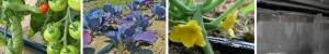 Tropfbewässerungsanlagen_driptape2-300x50